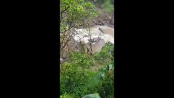 Hallan a otros cinco elefantes muertos en la cascada donde murió una manada