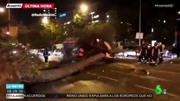 Imagen del árbol que ha caído en la Castellana