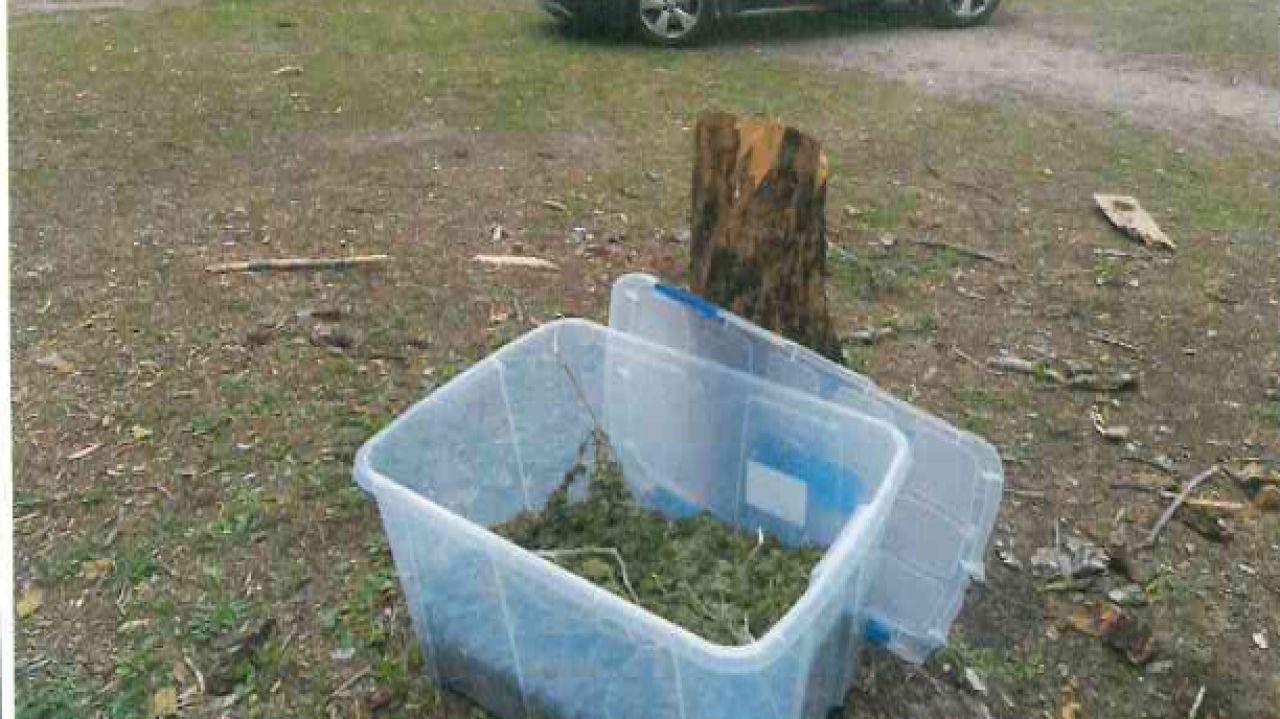 La Policía de Getafe encuentra 6 kilos de marihuana