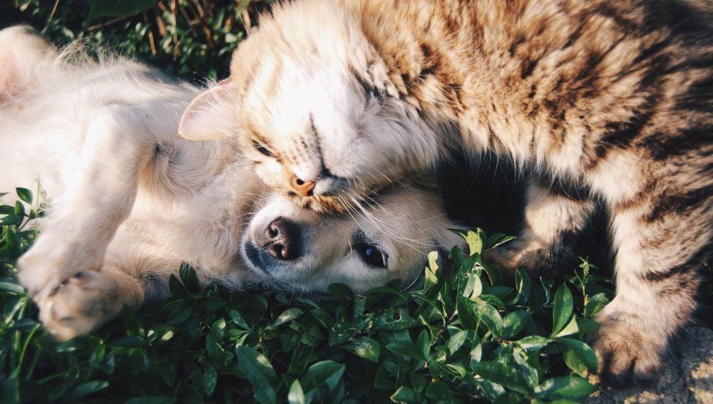 ¿Por qué nuestras mascotas comen hierba?