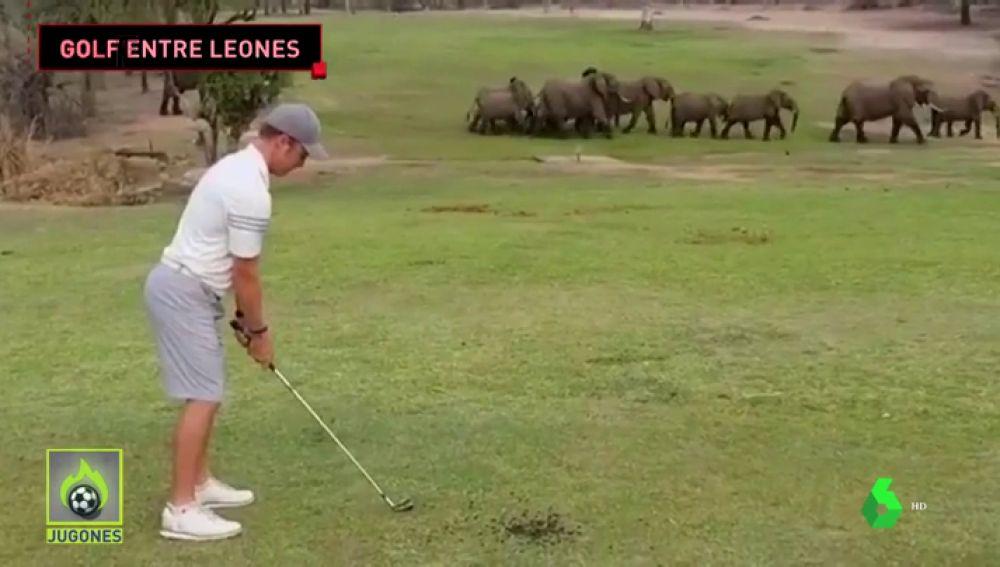 Así es el club de golf más salvaje del planeta: leones, hienas...