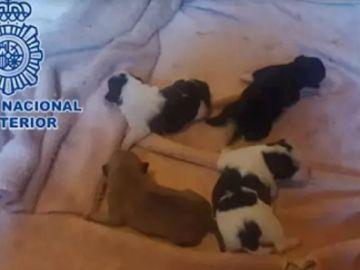 Imagen de los cachorros encontrados en un congelador en Gijón