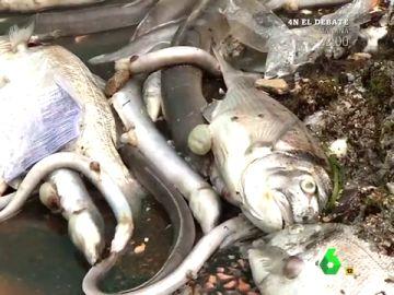 El Mar Menor agoniza: causas y consecuencias de una situación crítica para las aguas murcianas