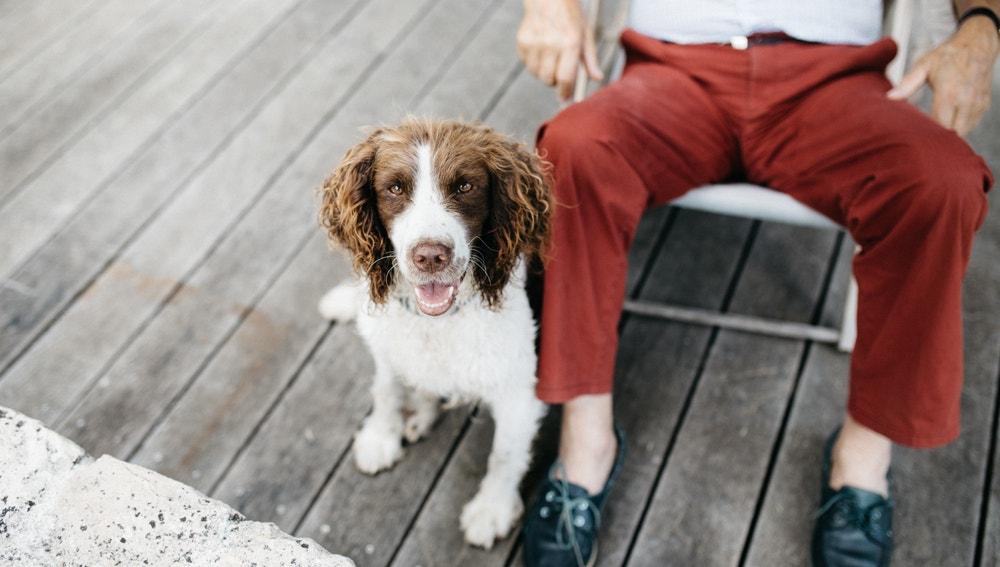 Vivir con perro puede alargar tu vida