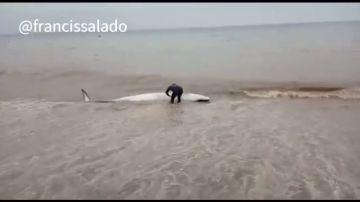 El heroico acto de un vecino de Málaga: salva la vida de una ballena varada empujándola hasta el mar