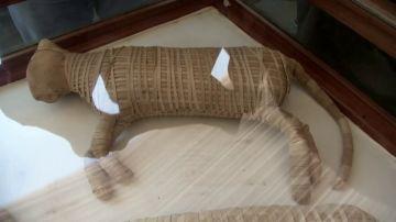 Gato momificado.