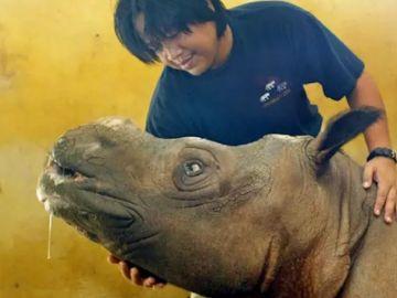 Imagen de archivo del rinoceronte de Sumatra
