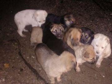 Imagen de los cachorros cuando fueron encontrados.