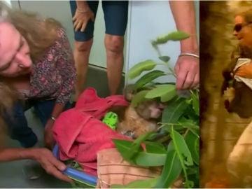 Imagen del reencuentro entre un koala y su salvadora en Australia