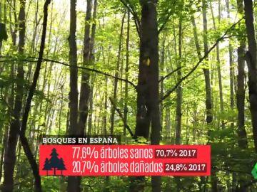 Los bosques, los otros grandes afectados por el cambio climático: sufrimos más incendios, más plagas y sequías más largas
