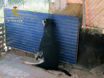 Imagen de un perro encontrado muerto en una parcela de Murcia