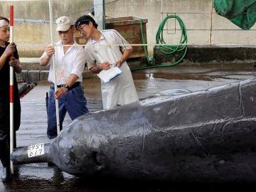 Imagen de archivo de la caza de ballenas