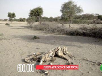 Vivir en Somalilandia, la prueba de las terribles consecuencias del cambio climático: la sequía lo ha arrasado todo