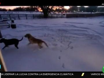 La reacción de dos perros al salir a un jardín lleno de nieve