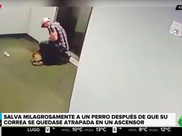 perro ascensor
