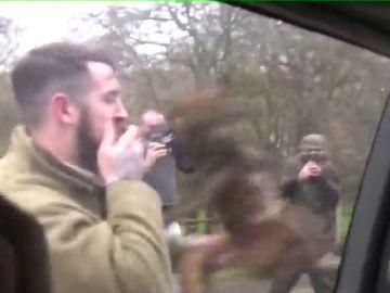 Graban a un cazador estampando en repetidas ocasiones un zorro contra el coche de una asociación animalista