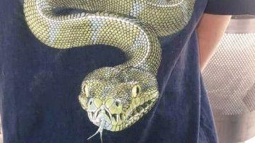 Imagen de la camiseta de Stevie con la imagen de una serpiente.