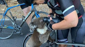 Imagen del momento en el que la ciclista da de beber agua al koala.