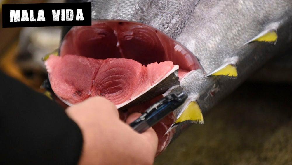 Imagen de un atún