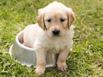 Imagen de archivo de un cachorro