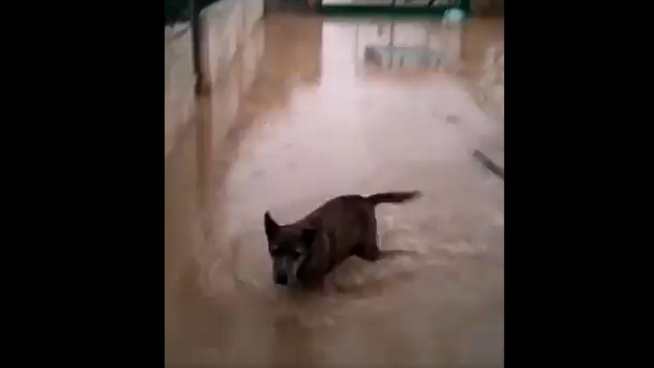 Un perro en el refugio de la protectora de Xàtiva, inundado por el temporal