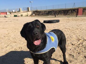 Pocahontas, la perra de asistencia robada en Aranjuez