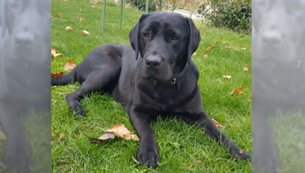 Pocahontas, la perra adiestrada robada en Aranjuez