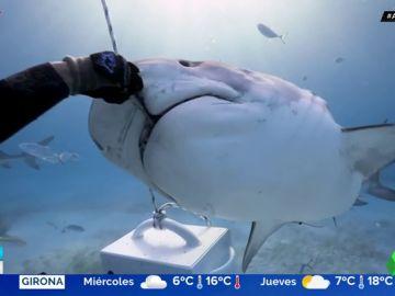 Alimenta a un tiburón con sus propias manos en mitad del océano