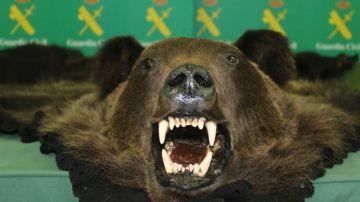 La piel y la cabeza del oso ofertado