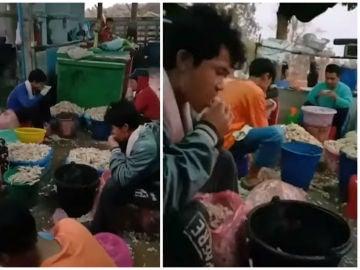 Los trabajadores de la fábrica limpian el pollo con la boca.