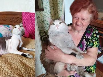 Imagen del gato junto a su dueña.