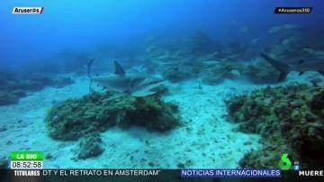 """Un buzo se juega la vida al sumergirse en el océano """"a la hora de comer"""" de los tiburones"""