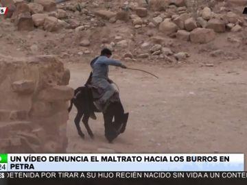 Un impactante vídeo denuncia el maltrato que sufren los burros de carga de turistas en Jordania