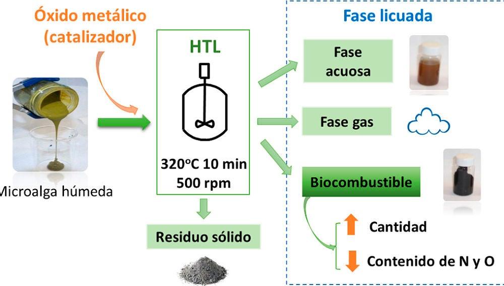 Nuevo biocombustible con microalgas