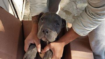 Rene, el cachorro cedido a Xollin