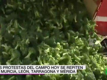 """REEMPLAZO Los agricultores arrojan toneladas de brócoli en las protestas de Murcia: """"Está por el suelo y los precios también"""""""