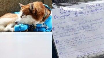 Imágenes del perro y del cartel que deja la dueña.