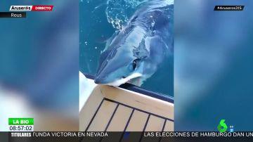 El tiburón más rápido del mundo ataca un yate de lujo en Nueva Zelanda