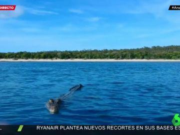Un dron en pleno vuelo graba el impactante momento en el que un cocodrilo se abalanza sobre él