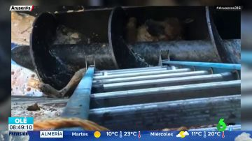 El angustioso rescate de un perro a punto de morir entre las cuchillas de una trituradora de carne