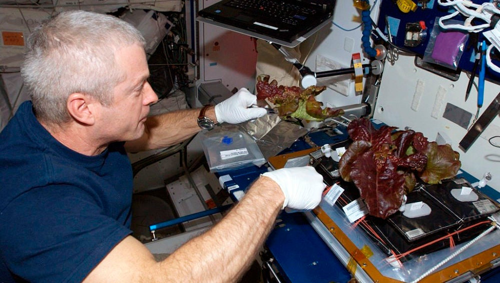 Lechugas espaciales para viajar a Marte