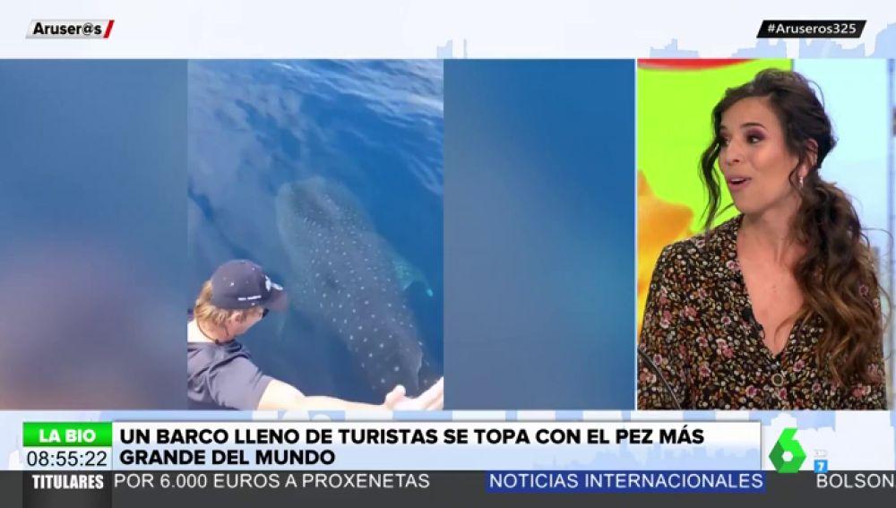 Un barco de turistas se encuentra con un tiburón ballena: así es el pez más grande del mundo