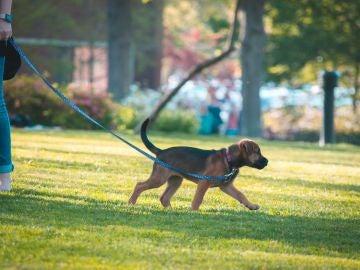Una mujer pasea a su perro   Archivo