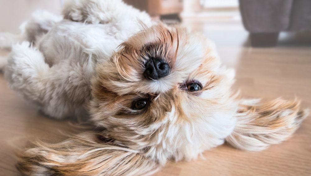 Como seguir cuidando de tu mascota ante la crisis del COVID 19