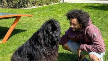 Marcelo y su perra Lola