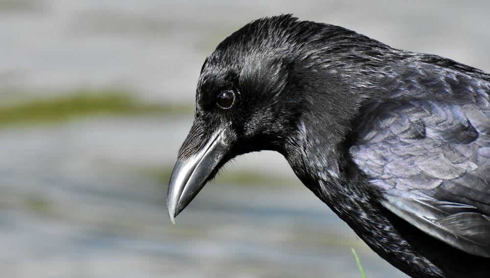 Las aves mas innovadoras reducen su riesgo de extincion