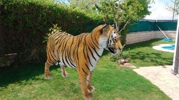 El tigre en un jardín
