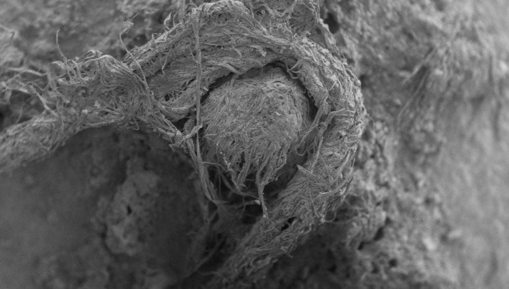 Hallada una cuerda confeccionada por neandertales con fibras naturales