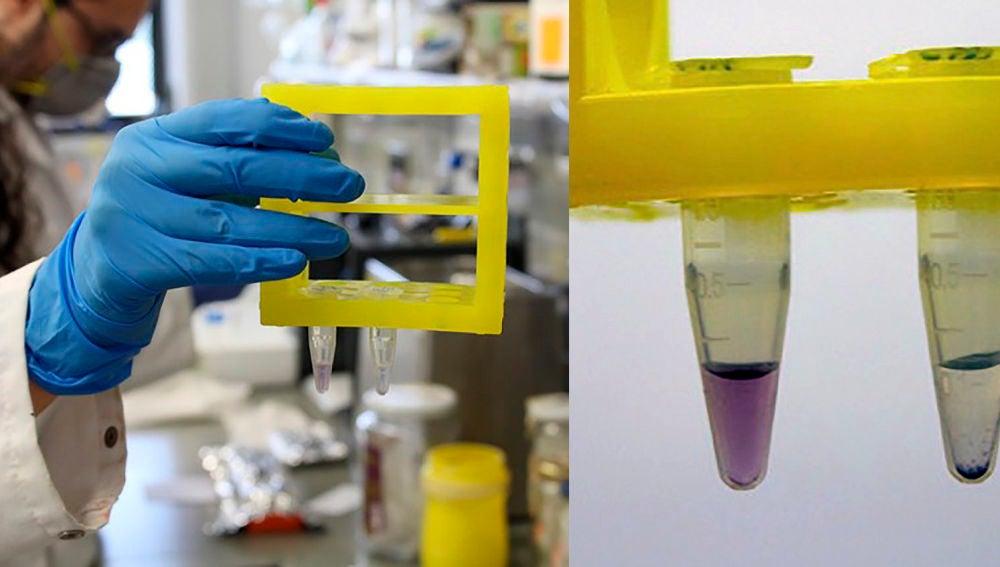 Test colorimetrico con nanoparticulas de oro para detectar el coronavirus