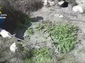 Investigan a una persona por saltarse el confinamiento para cazar en el Parque Nacional de las Tablas de Daimiel